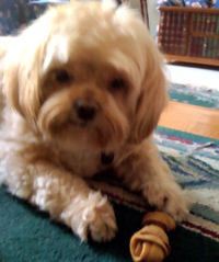 Dog Sitting Farmington